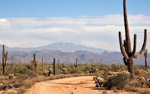 Фото обои горы, пустыня, жара, кактусы