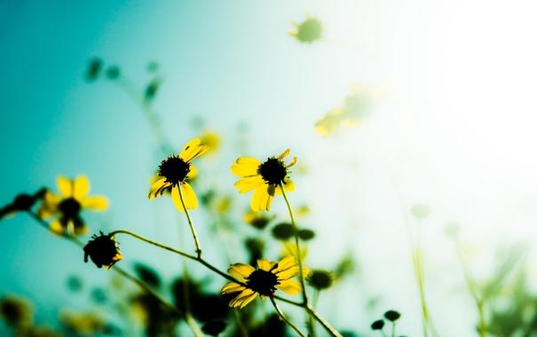 Фото обои макро, свет, цветы, природа, фото, обои, сад