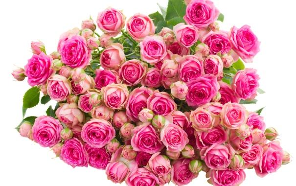 Фото обои цветы, розы, букет, бутоны, flowers, bouquet, roses