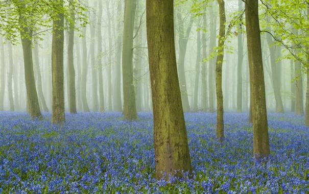 Фото обои лес, трава, деревья, цветы, туман, ствол