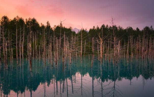 Фото обои природа, лес, озеро