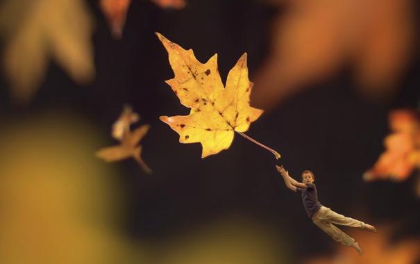 Фото обои лист, мальчик, монтаж