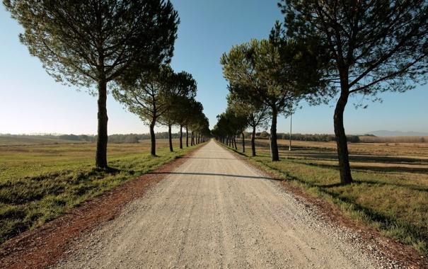 Фото обои дорога, поле, лето, деревья