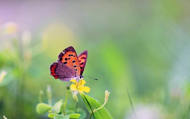 Фото обои трава, цветы, бабочка