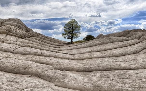 Фото обои природа, скала, дерево, камень