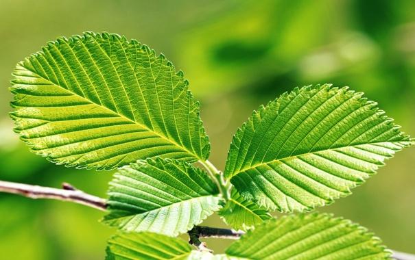 Фото обои листья, макро, обои, зелёные
