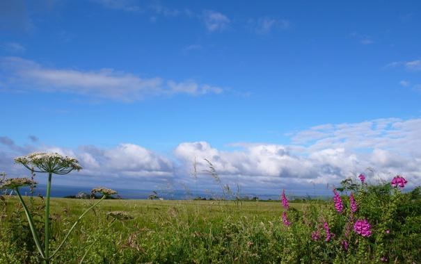 Фото обои поле, небо, трава, облака, цветы