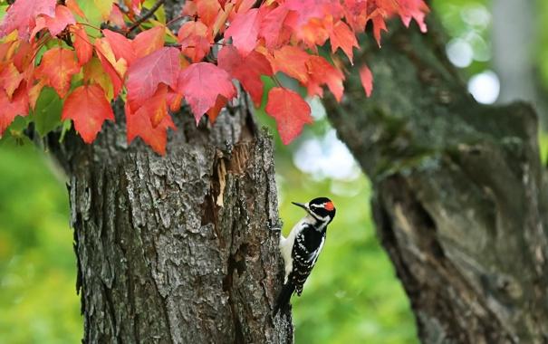 Фото обои осень, дерево, птица