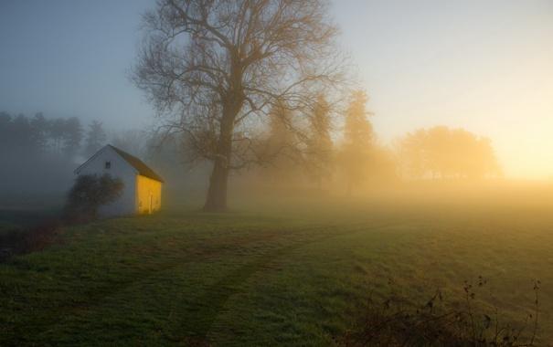 Фото обои дорога, туман, утро