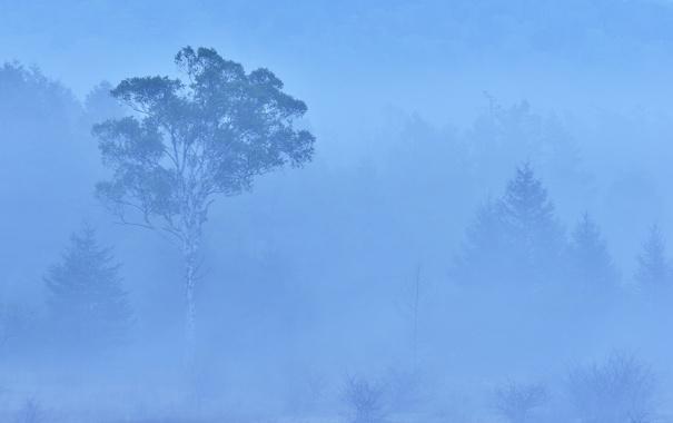 Фото обои лес, деревья, туман, дымка
