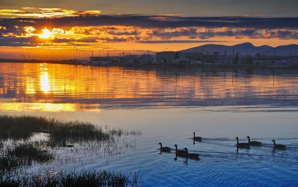 Фото обои вода, закат, птица
