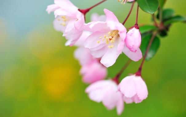 Фото обои макро, цветы, цветение, бутончик