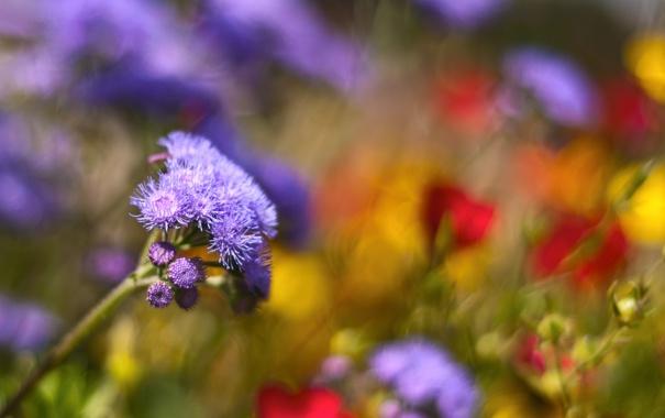 Фото обои поляна, много, rainbow meadow