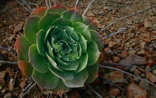 Фото обои цветок, макро, ветки, галька, камни, green, зелёный