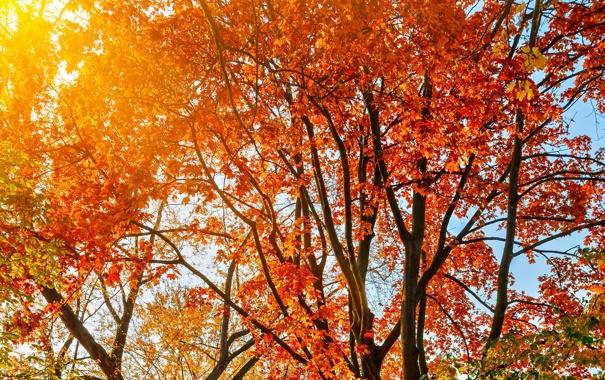 Фото обои осень, листья, солнце, лучи, деревья, пейзаж, природа