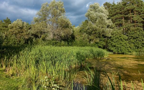 Фото обои зелень, лес, лето, трава, солнце, деревья, тучи