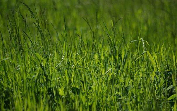 Фото обои зелень, лето, трава, природа, фото, весна, зелёный