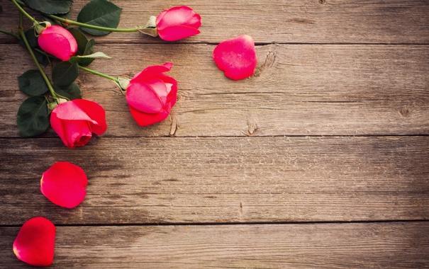 Фото обои цветы, розы, лепестки, розовые