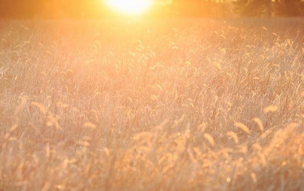 Фото обои природа, свет, трава