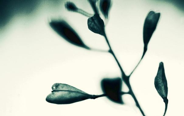 Фото обои листья, макро, природа, фото, фон, обои, растение