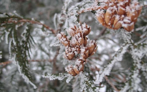 Фото обои зима, иней, ветки