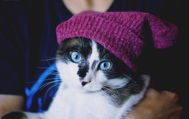 Фото обои кошка, взгляд, шапочка, голубоглазая