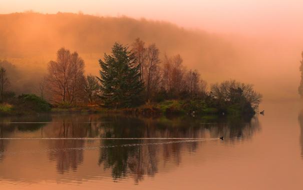 Фото обои осень, лес, природа, река, утка