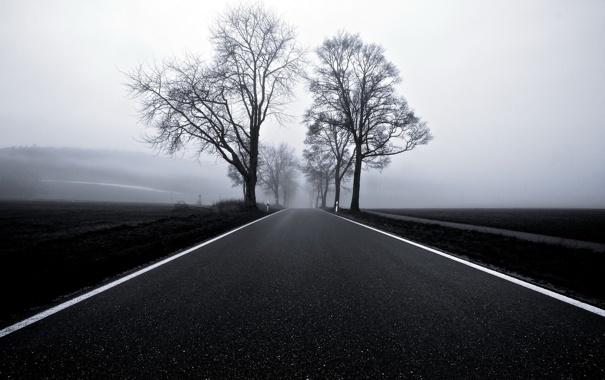 Фото обои дорога, пейзаж, туман
