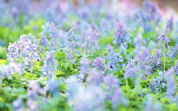 Фото обои цветы, весна, луг