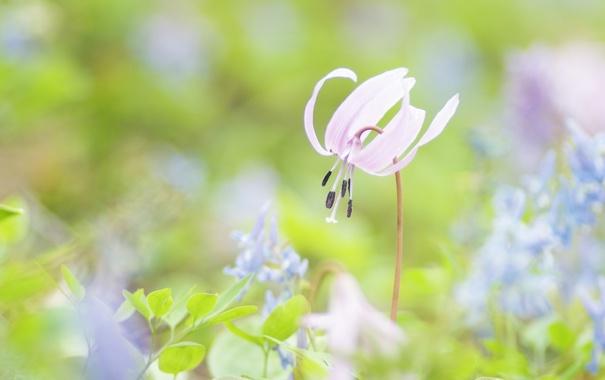 Фото обои зелень, цветок, трава, макро, розовый, нежность, весна