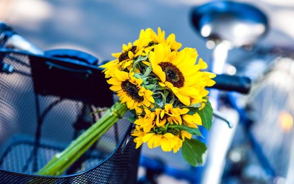 Фото обои подсолнухи, цветы, велосипед, корзина, желтые
