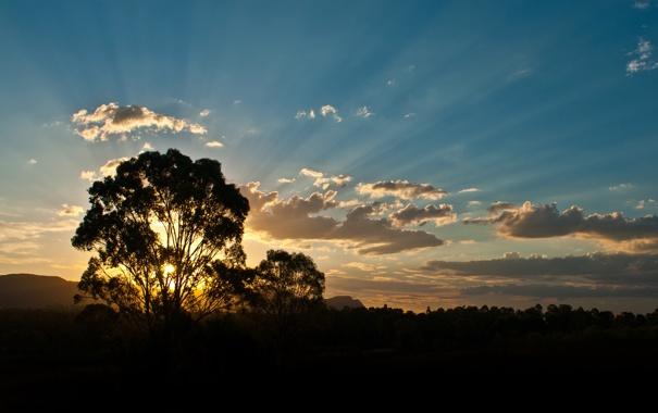 Фото обои лес, солнце, облака, лучи, деревья, закат, горы