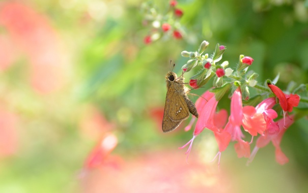 Фото обои цветы, фон, бабочка, розовые