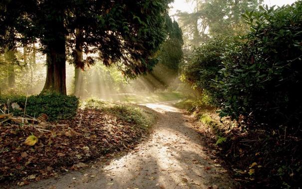 Фото обои дорога, лес, солнце, лучи, свет, деревья, природа