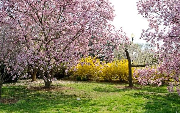Фото обои трава, деревья, цветы, парк, весна, сад, фонарь
