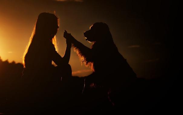 Фото обои девушка, закат, собака
