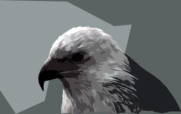 Фото обои серый, клюв, ястреб, замечательная картинка