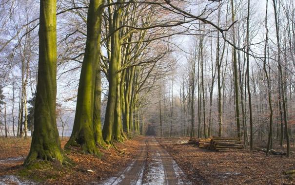 Фото обои дорога, лес, даль, ряд, брёвна, девевья