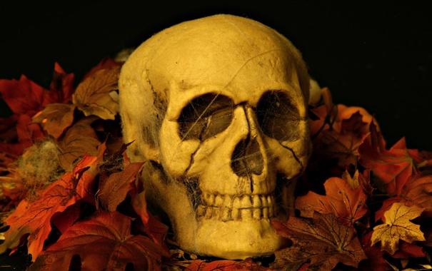Обои картинки фото листья, хеловин, череп