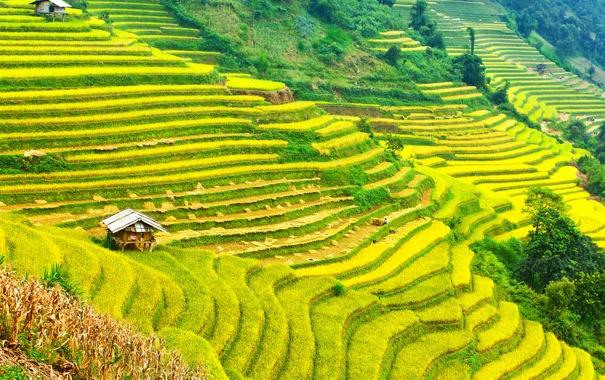 Фото обои горы, склон, зелень, домики, плантации, поля