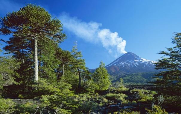 Фото обои лес, деревья, природа, дым, гора, вулкан
