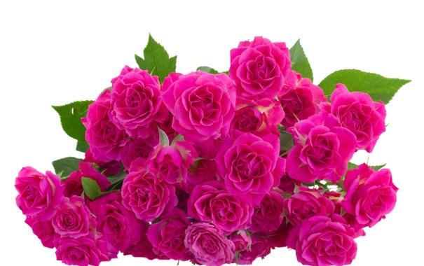 Фото обои цветы, flowers, листики, leaves, розовые розы, pink roses
