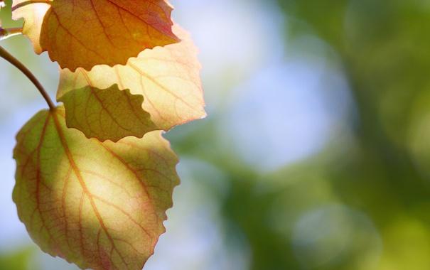 Фото обои листья, макро, природа, дерево, фотографии