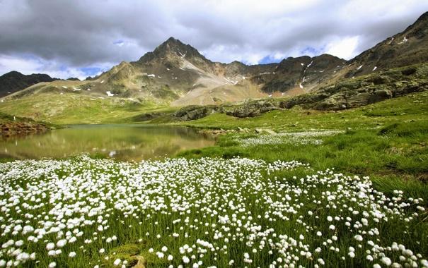 Фото обои поле, цветы, горы, водоём