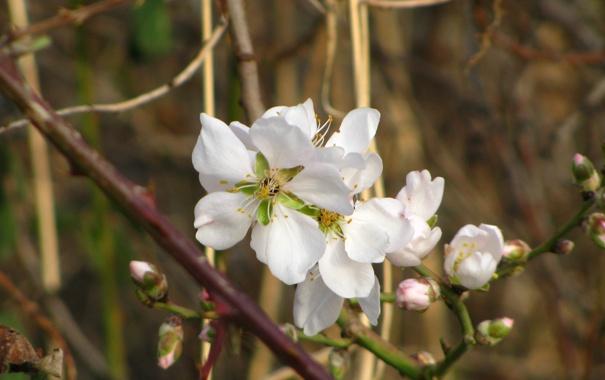 Фото обои цветок, макро, весна, цветение