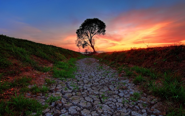 Фото обои пейзаж, закат, дерево