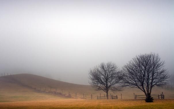 Фото обои поле, пейзаж, туман, забор