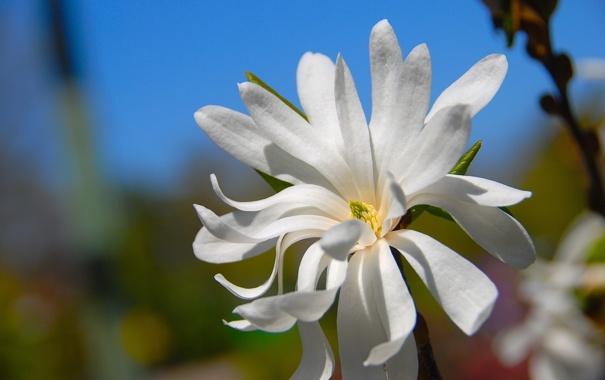 Фото обои цветок, небо, природа, растение, лепестки