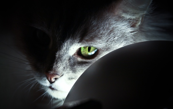 Фото обои light, cat, eye, look, head, feline