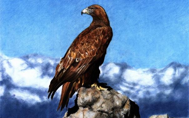 Фото обои птица, рисунок, арт, орёл